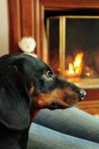 Black dog near a fireplace.
